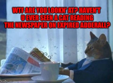 92bd4 i should buy a boat cat meme imgflip