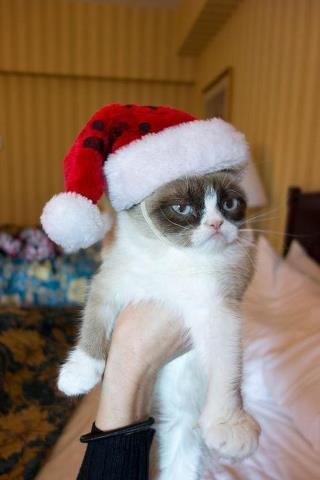 grumpy cat christmas meme template thumbnail - Merry Christmas Meme Generator