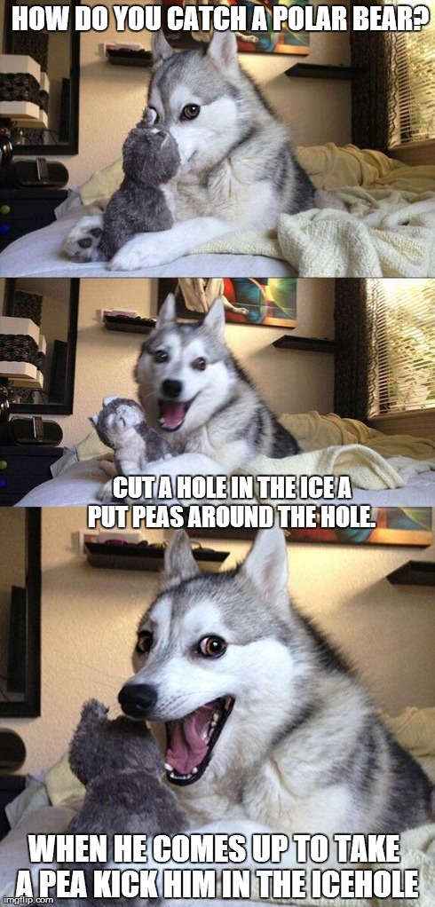 It is better understood when spoken.  | HOW DO YOU CATCH A POLAR BEAR? CUT A HOLE IN THE ICE A PUT PEAS AROUND THE HOLE.  WHEN HE COMES UP TO TAKE A PEA KICK HIM IN THE ICEHOLE | image tagged in memes,bad pun dog | made w/ Imgflip meme maker