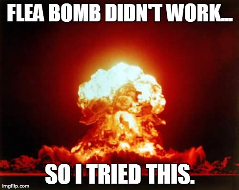 Nuclear Explosion Meme | FLEA BOMB DIDN'T WORK... SO I TRIED THIS. | image tagged in memes,nuclear explosion | made w/ Imgflip meme maker