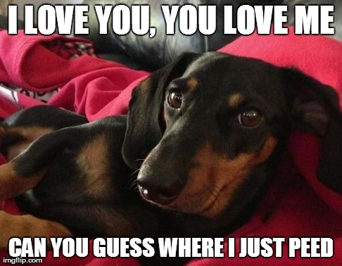 I LOVE YOU, YOU LOVE ME CAN YOU GUESS WHERE I JUST PEED | image tagged in dog,dogs,meme,animeme | made w/ Imgflip meme maker