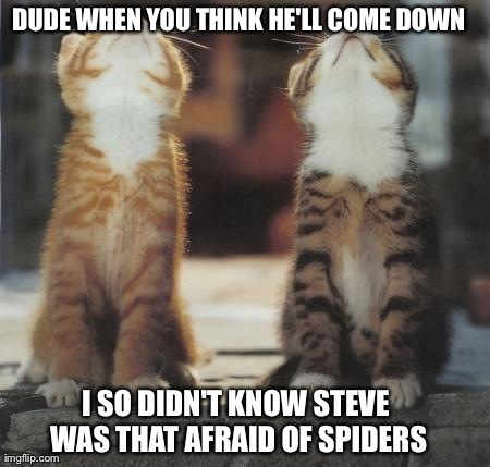 cats looking up | DUDE WHEN YOU THINK HE'LL COME DOWN I SO DIDN'T KNOW STEVE WAS THAT AFRAID OF SPIDERS | image tagged in cats looking up | made w/ Imgflip meme maker