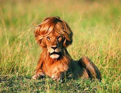 Image result for funny lion