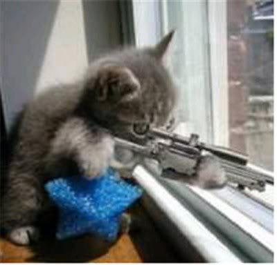 High Quality cats with guns Blank Meme Template