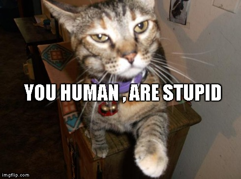 stupid human | YOU HUMAN , ARE STUPID | image tagged in westernrailways,cats,memes | made w/ Imgflip meme maker