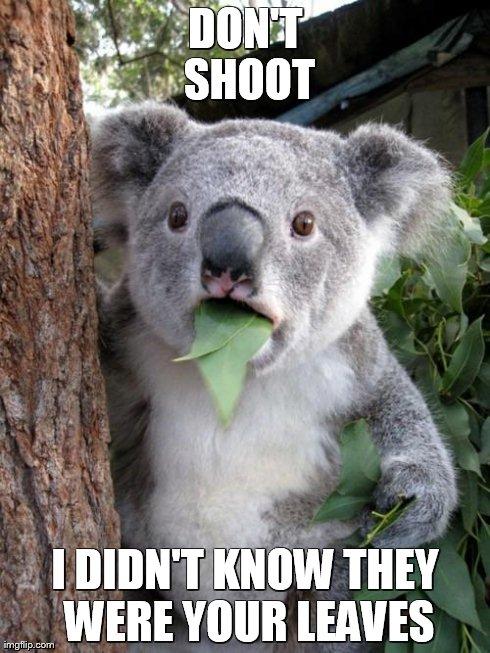 surprised koala meme