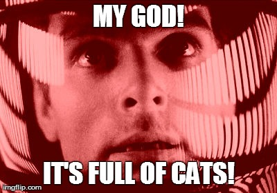 My god! It's full of cats! | MY GOD! IT'S FULL OF CATS! | image tagged in memes,my god it's full of stars,david bowman | made w/ Imgflip meme maker
