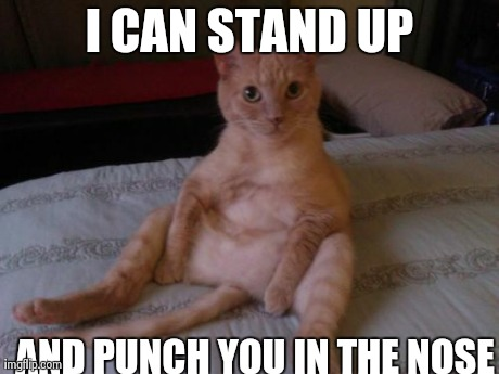 Chester The Cat | I CAN STAND UP AND PUNCH YOU IN THE NOSE | image tagged in memes,chester the cat | made w/ Imgflip meme maker