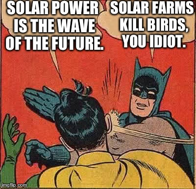 Image result for solar kills birds meme