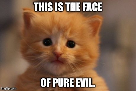 Underestimate him at your peril! | THIS IS THE FACE OF PURE EVIL. | image tagged in cats,evil,memes,funny,cute | made w/ Imgflip meme maker