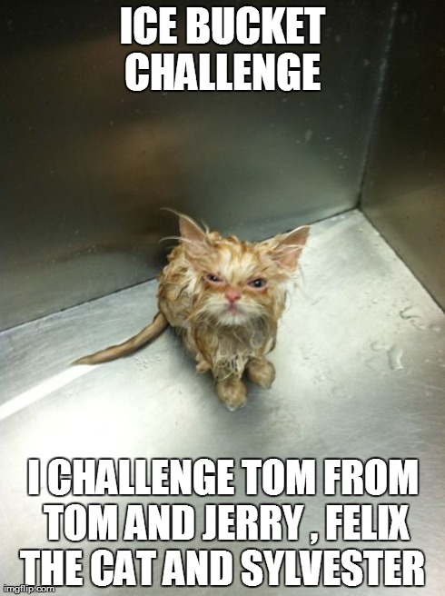 Kill You Cat | ICE BUCKET CHALLENGE  I CHALLENGE TOM FROM TOM AND JERRY , FELIX THE CAT AND SYLVESTER | image tagged in memes,kill you cat | made w/ Imgflip meme maker