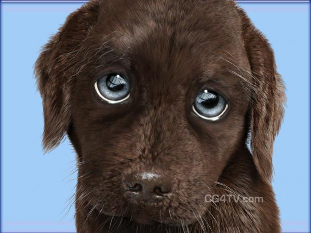Puppy Dog Eyes Blank Template Imgflip