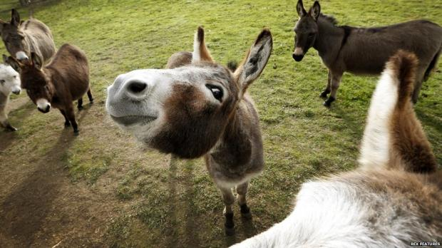 happy donkey blank template imgflip