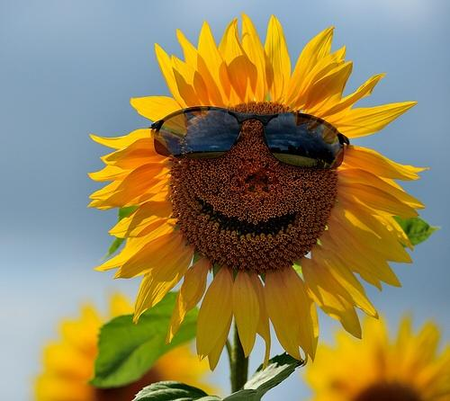 High Quality Cool sunflower Blank Meme Template