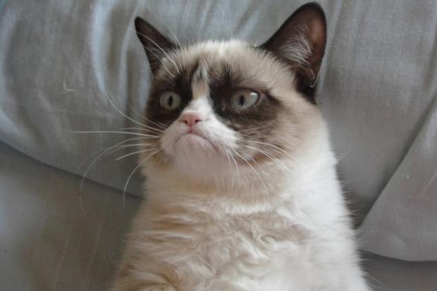 Grumpy Cat Blank Template - Imgflip