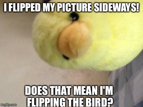 Welcome To MelonMemez! | I FLIPPED MY PICTURE SIDEWAYS! DOES THAT MEAN I'M FLIPPING THE BIRD? | image tagged in bird | made w/ Imgflip meme maker
