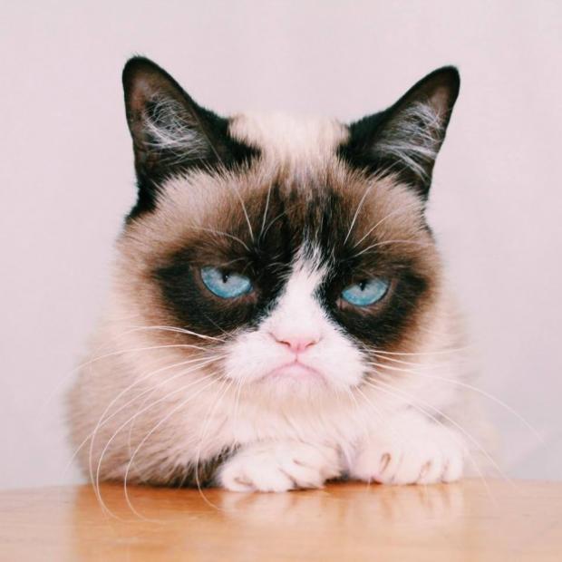 grumpy cat again Blank Template - Imgflip
