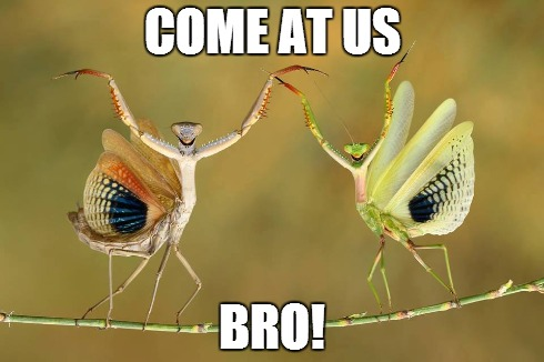 Come at us bro! | COME AT US BRO! | image tagged in meme,praying mantis,memes | made w/ Imgflip meme maker