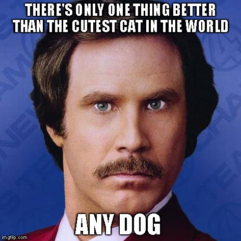 Ron Burgundy- there's one thing better than... | THERE'S ONLY ONE THING BETTER THAN THE CUTEST CAT IN THE WORLD ANY DOG | image tagged in ron burgundy,anchorman,will ferrell,funny,meme | made w/ Imgflip meme maker