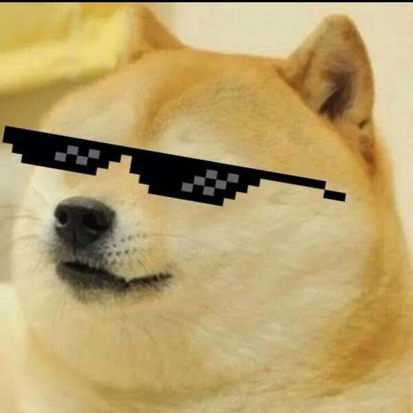 Image result for doge with mlg shades
