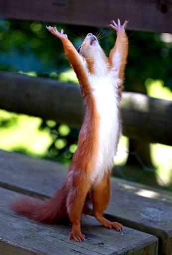 """""""squirrel"""" Meme Templates - Imgflip"""