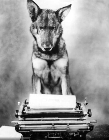 Dog Writing Blank Template - Imgflip