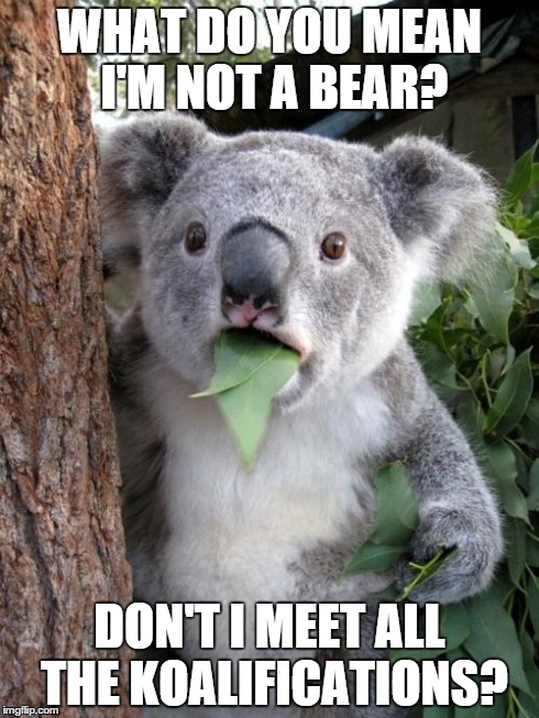 high koala meme - photo #21