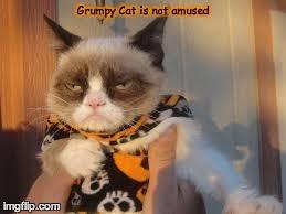 Grumpy Cat Halloween Meme - Imgflip