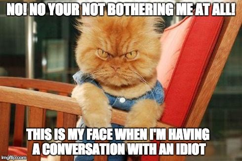 mad cat | NO! NO YOUR NOT BOTHERING ME AT ALL! THIS IS MY FACE WHEN I'M HAVING A CONVERSATION WITH AN IDIOT | image tagged in mad cat,cat | made w/ Imgflip meme maker