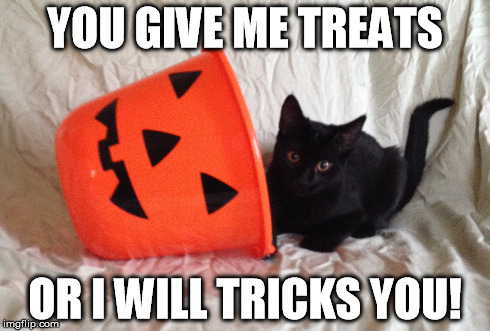 Halloween Cat! | YOU GIVE ME TREATS OR I WILL TRICKS YOU! | image tagged in cat,halloween,black cat | made w/ Imgflip meme maker