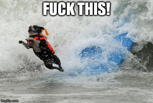 db7xl image tagged in dog surf,funny,dogs imgflip