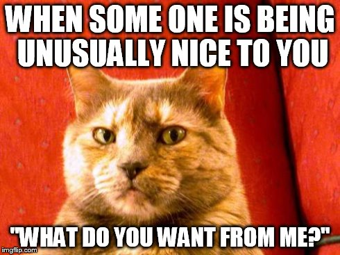 "Suspicious Cat | WHEN SOME ONE IS BEING UNUSUALLY NICE TO YOU ""WHAT DO YOU WANT FROM ME?"" 