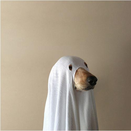 Ghost Doge Meme Template