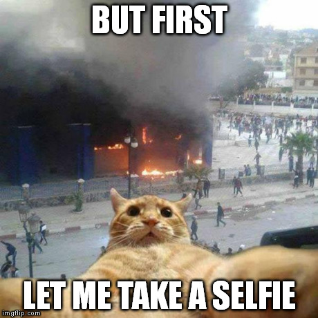 Selfie cat | BUT FIRST LET ME TAKE A SELFIE | image tagged in selfie cat,cats,funny,selfie | made w/ Imgflip meme maker