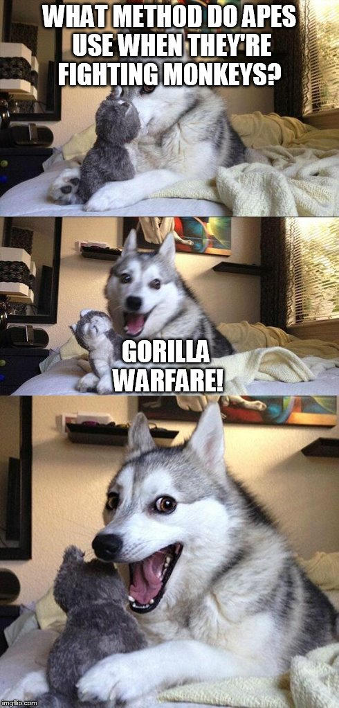 Bad Pun Dog Meme | WHAT METHOD DO APES USE WHEN THEY'RE FIGHTING MONKEYS? GORILLA WARFARE! | image tagged in memes,bad pun dog | made w/ Imgflip meme maker
