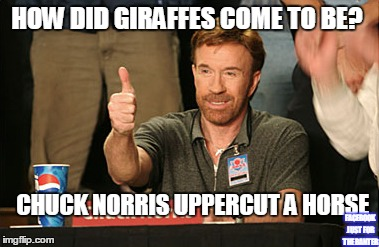 Chuck Norris Approves | HOW DID GIRAFFES COME TO BE? CHUCK NORRIS UPPERCUT A HORSE FACEBOOK JUST FOR THE BANTER | image tagged in memes,chuck norris approves | made w/ Imgflip meme maker