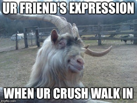 Ridiculously Photogenic Goat | UR FRIEND'S EXPRESSION WHEN UR CRUSH WALK IN | image tagged in ridiculously photogenic goat | made w/ Imgflip meme maker