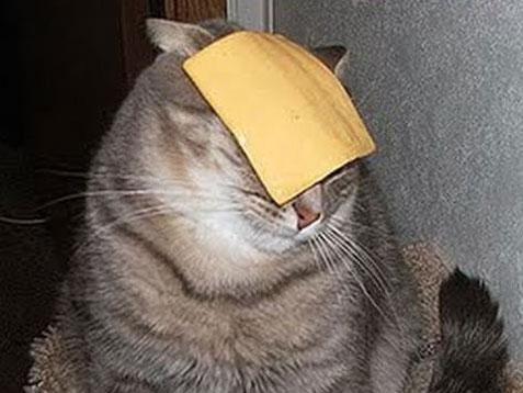 """cat"" Meme T..."