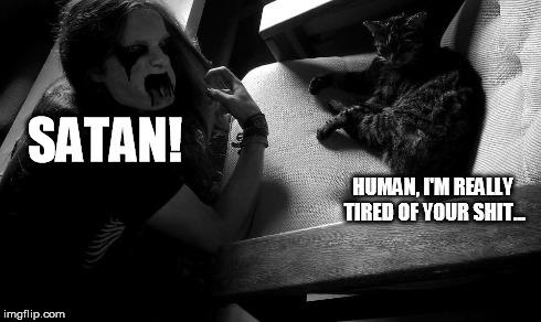 Musical Cat Meme