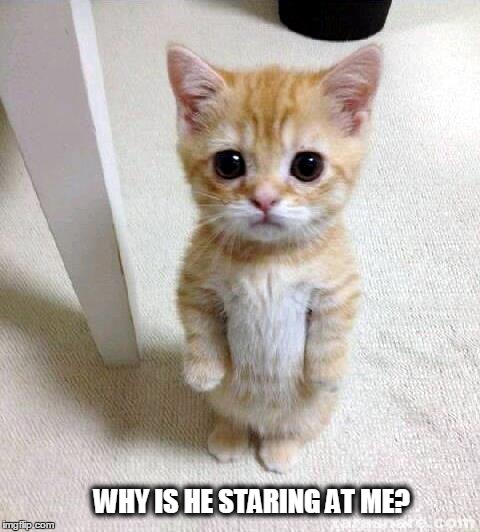 Cute Cat Meme | WHY IS HE STARING AT ME? | image tagged in cute cat | made w/ Imgflip meme maker