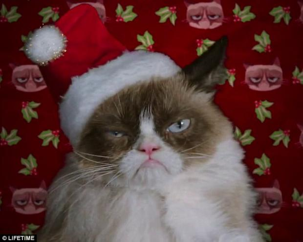 grumpy cat christmas meme template - Merry Christmas Meme Generator