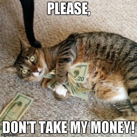 money cat | PLEASE, DON'T TAKE MY MONEY! | image tagged in money cat | made w/ Imgflip meme maker