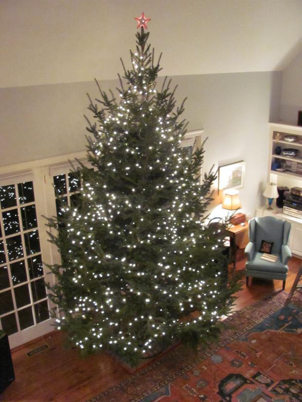 high quality christmas tree 15ft blank meme template