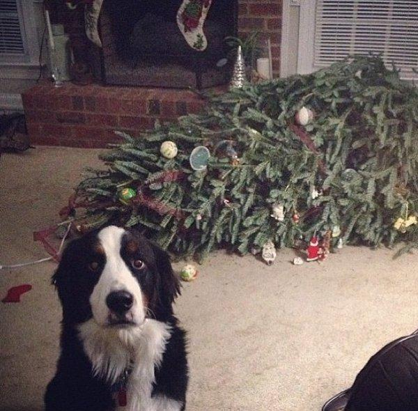 Dog Christmas Tree Blank Meme Template
