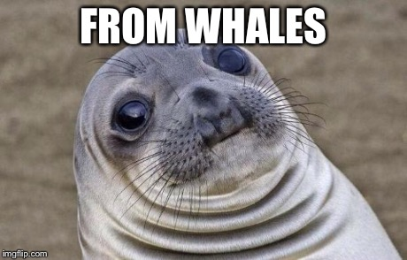 Awkward Moment Sealion Meme | FROM WHALES | image tagged in memes,awkward moment sealion | made w/ Imgflip meme maker
