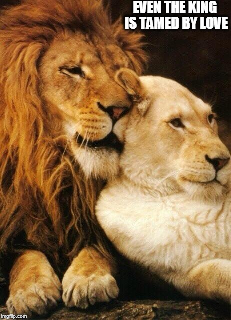 Love | EVEN THE KING IS TAMED BY LOVE | image tagged in love | made w/ Imgflip meme maker