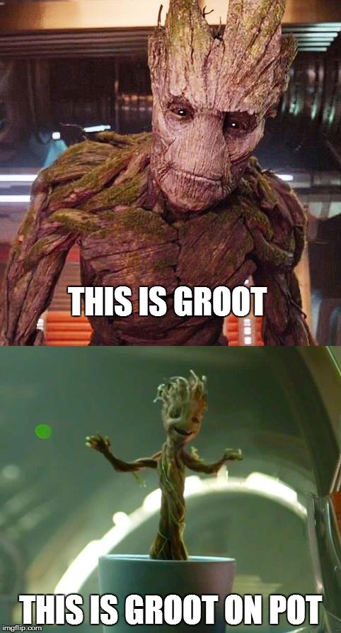 This is Groot | THIS IS GROOT THIS IS GROOT ON POT | image tagged in marvel,groot,pot,marijuana,guardians of the galaxy,avengers | made w/ Imgflip meme maker