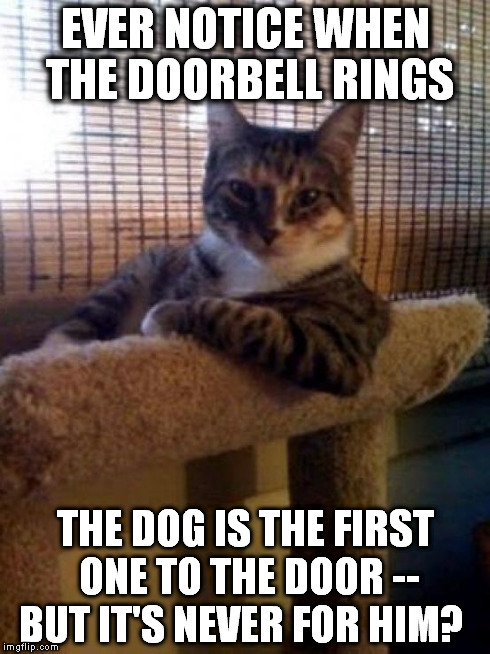 The Most Interesting Cat In The World | EVER NOTICE WHEN THE DOORBELL RINGS THE DOG IS THE FIRST ONE TO THE DOOR -- BUT IT'S NEVER FOR HIM? | image tagged in memes,the most interesting cat in the world | made w/ Imgflip meme maker