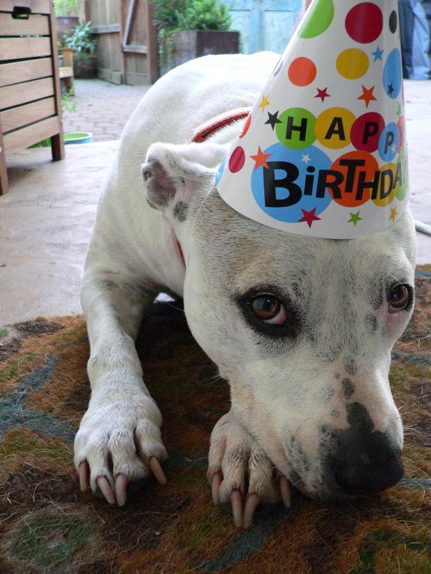 Pitbull Dog Birthday Cake