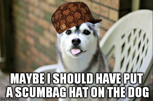 MAYBE I SHOULD HAVE PUT A SCUMBAG HAT ON THE DOG | made w/ Imgflip meme maker
